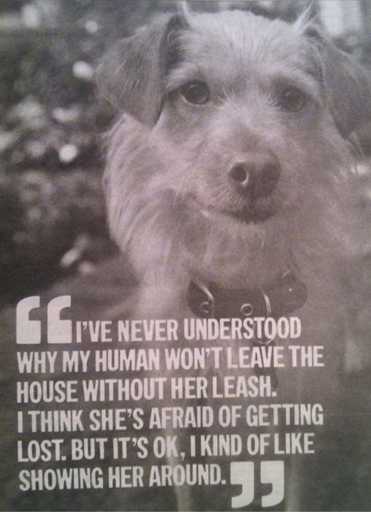 Dog thoughts on humans…