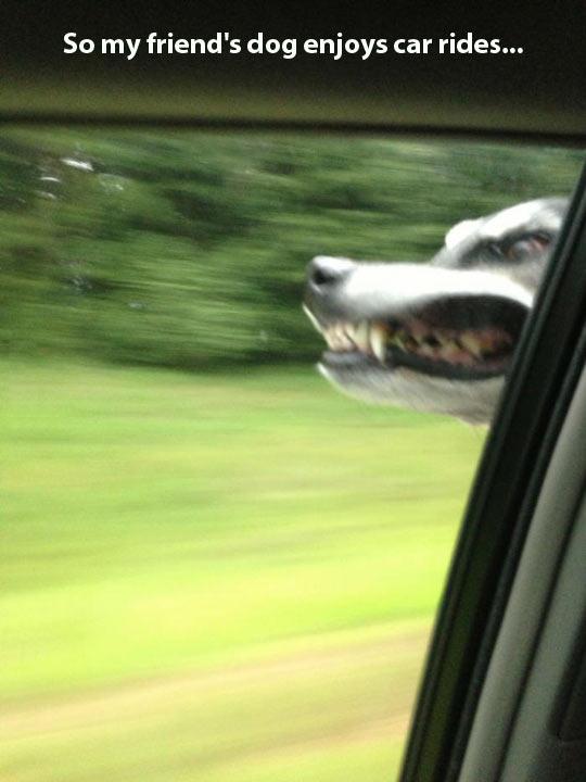 Enjoying car rides…