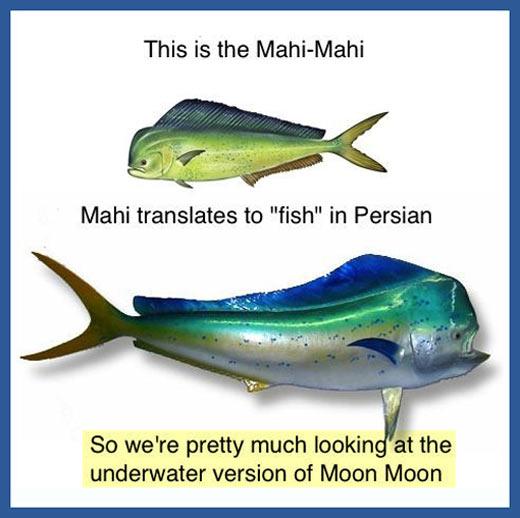 The Mahi-Mahi…