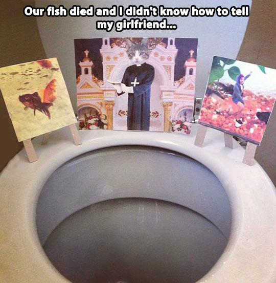 Mourning the fish…