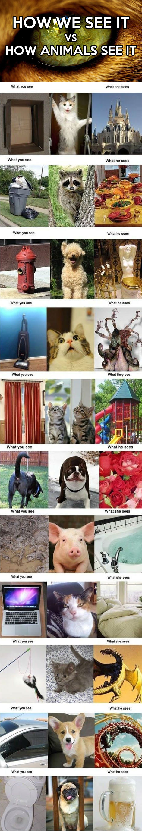 funny-how-animals-see-things