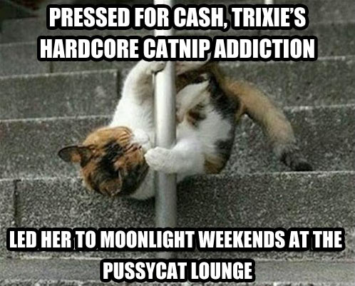Catnip addiction…