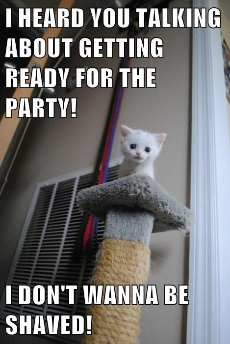Getting ready for the party…
