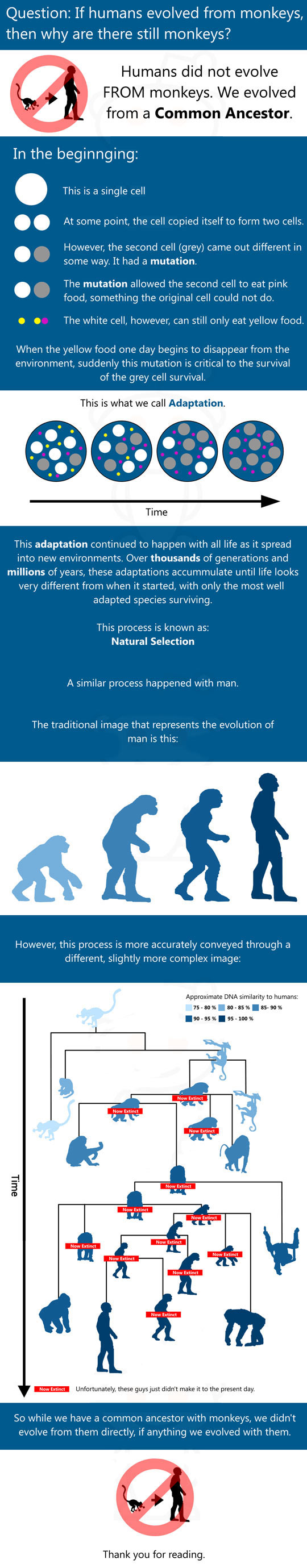 Humans did not evolve from monkeys…
