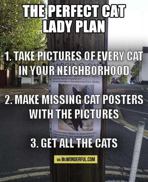 The perfect cat lady plan…