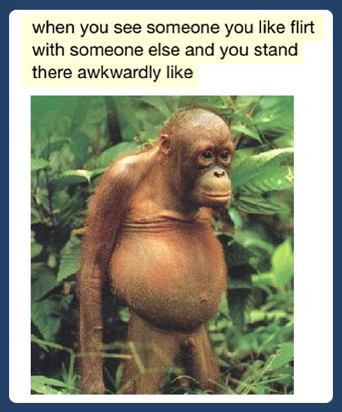 funny-monkey-face-Tumblr