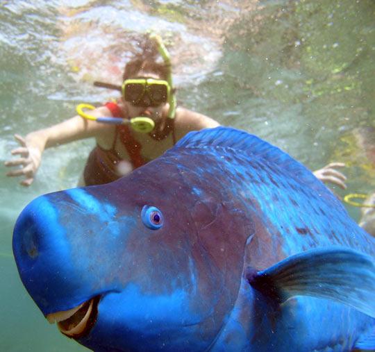 Parrot fish photobomb…