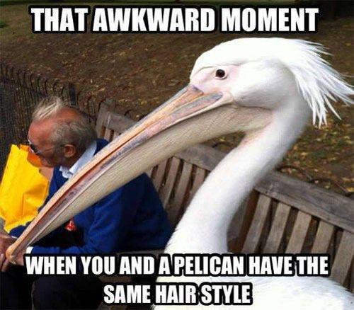 Pelican hair style…