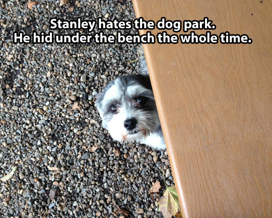 Scared of the dog park…