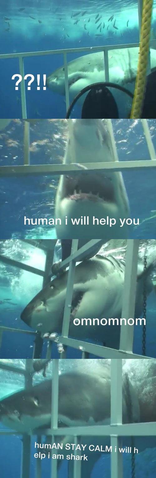 Stay calm, human…