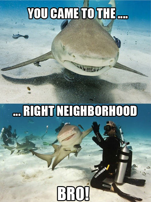 funny-shark-right-neighborhood-smiling