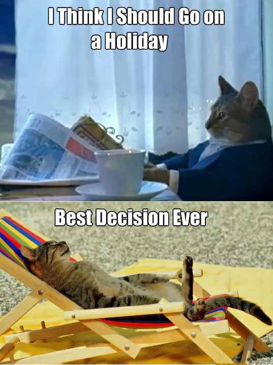 Sophisticated cat finds some time for himself…