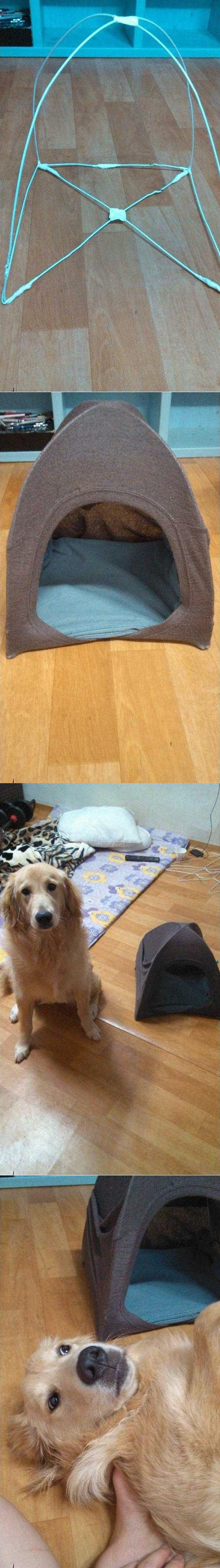 funny-tent-dog-small-disappoint