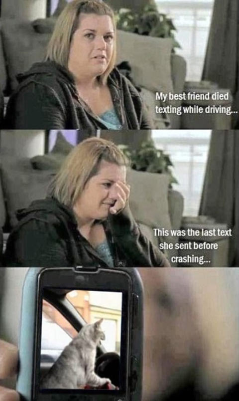 funny-texting-driving-cat-picture