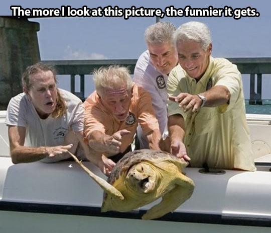 Turtle escape…