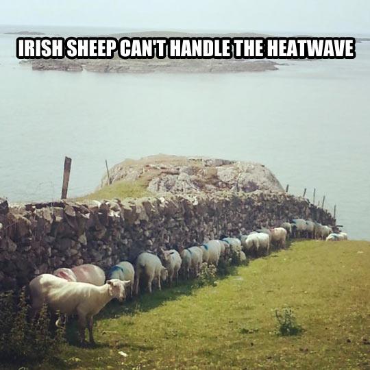 Heatwave in Ireland…