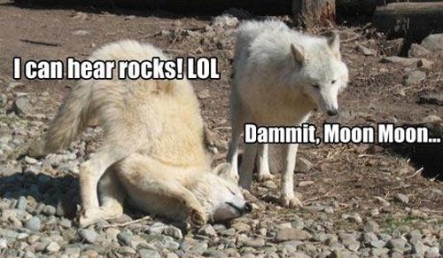 funny-wolf-Moon-rocks