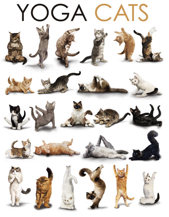 funny-yoga-cats-poses