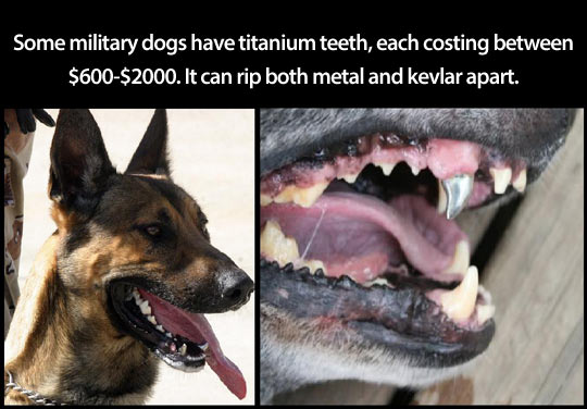 cool-dog-teeth-metal