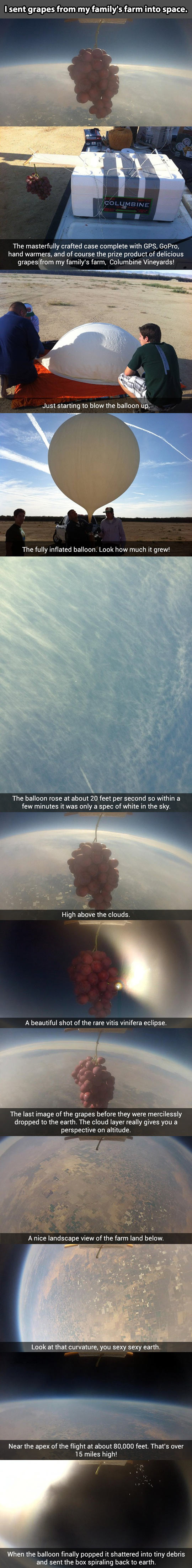 I sent grapes into space…