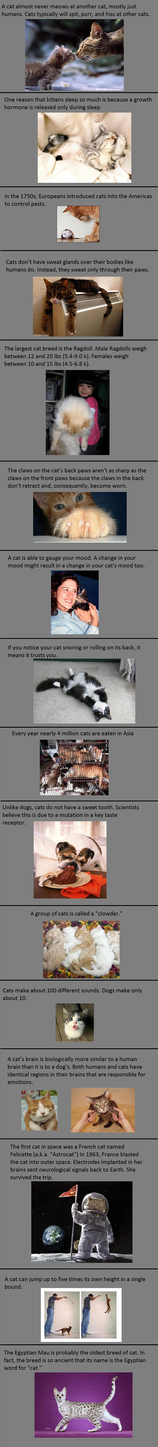 Interesting cat facts…