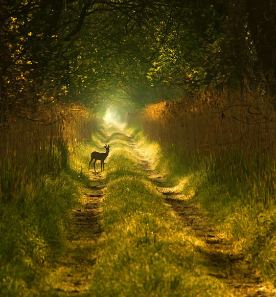 The most majestic path you'll see today…