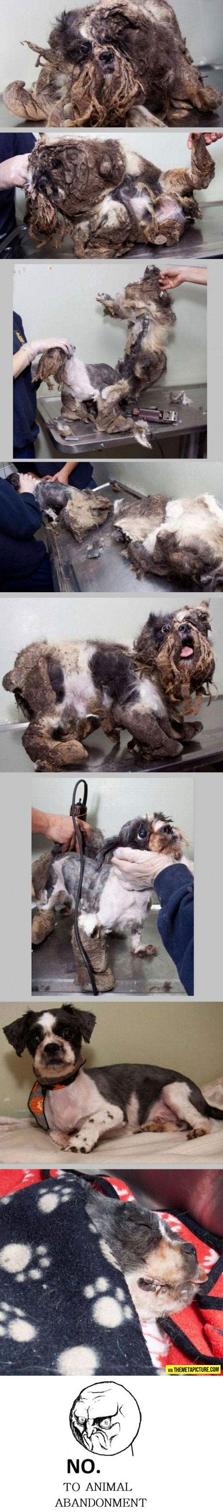 Rescued and saved…