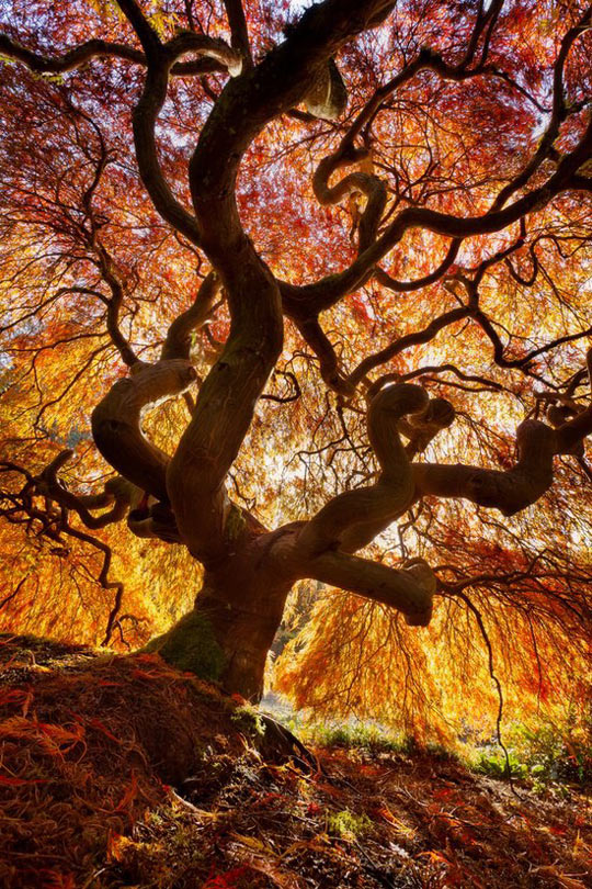 cool-tree-branch-colors