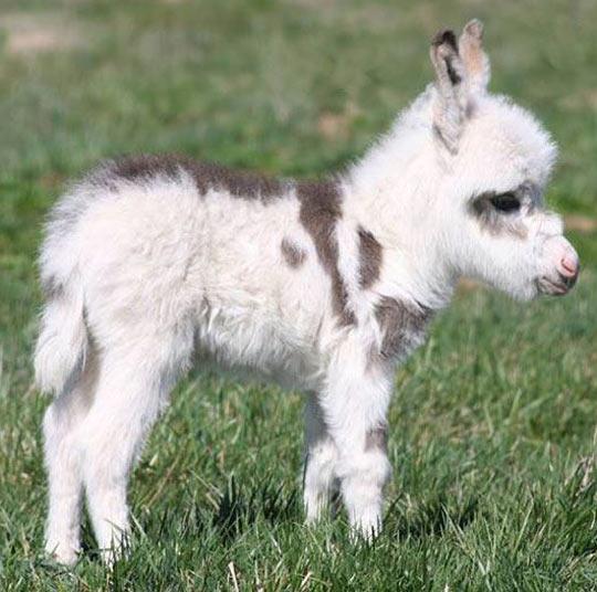 Cute baby donkey…