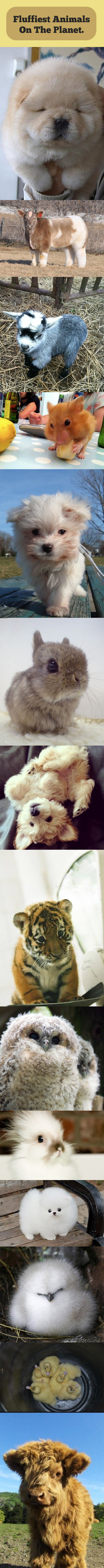 Too much fluffiness…