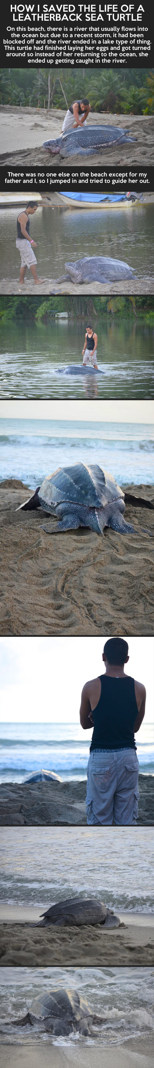 How I saved the life of a leatherback sea turtle...