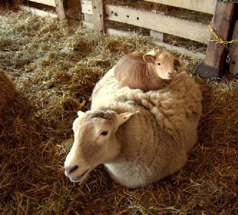 Curled up on top of mom…