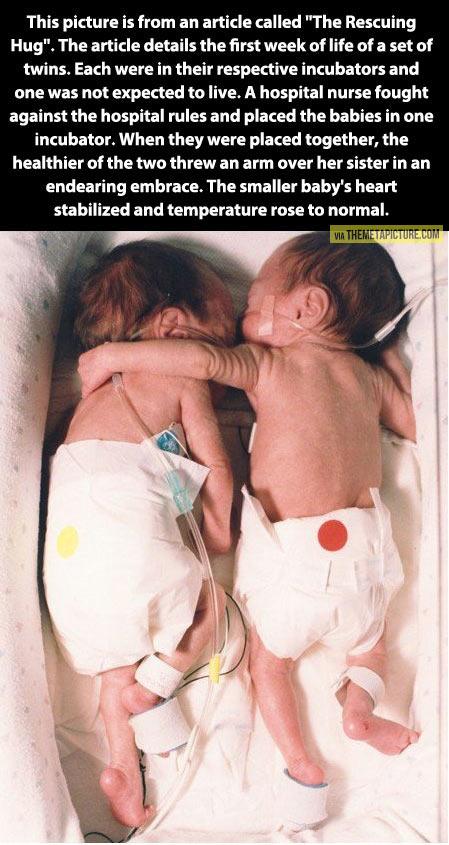 cute-story-babies-twins-incubator-hug