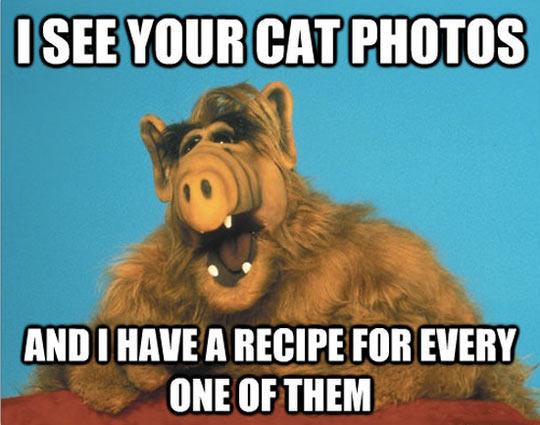 funny-Alf-cat-photos-recipe