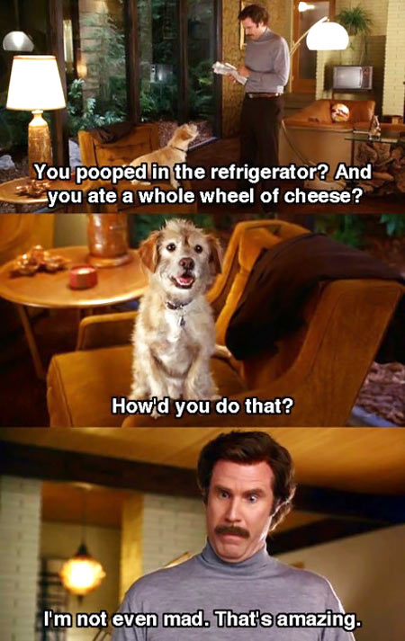 funny-Anchorman-dog-steal-food