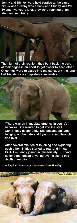 funny-Elephants-friends-zoo