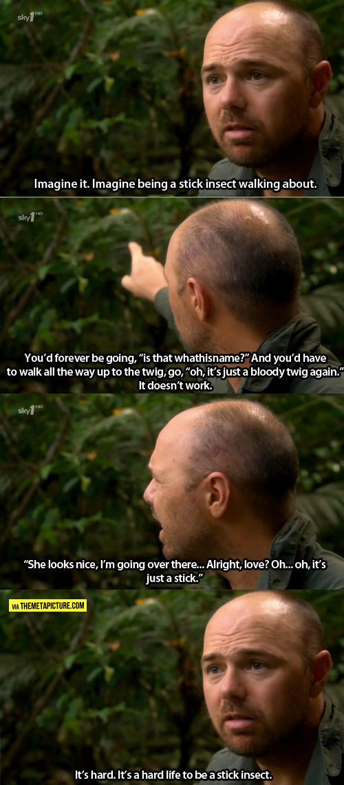 funny-Karl-Pilkington-insect