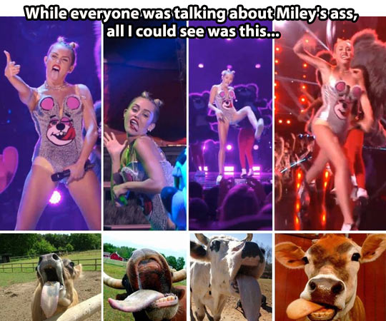 funny-Miley-Cyrus-WMA-cow-face