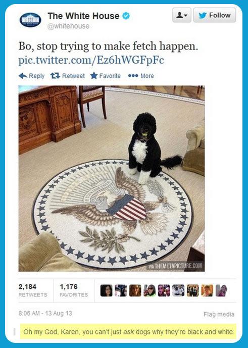 White house dog…
