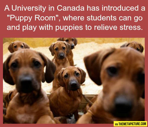 funny-University-Canada-puppy-room