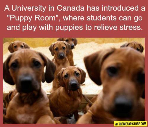 The amazing puppy room…