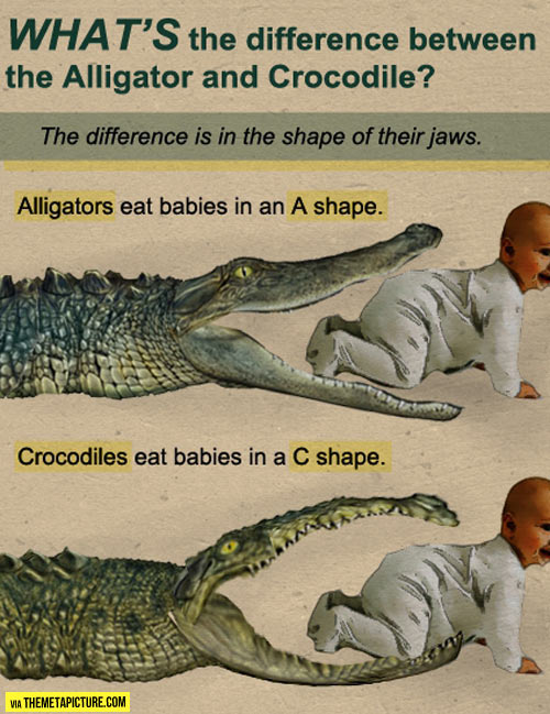 funny-alligator-vs-crocodile