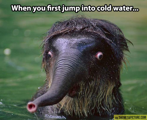 funny-animal-first-jump-cold-water
