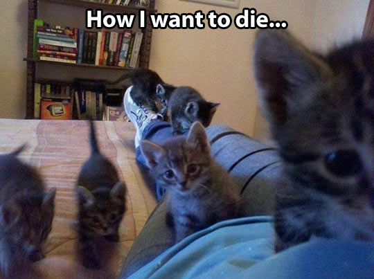 funny-baby-kittens-attack