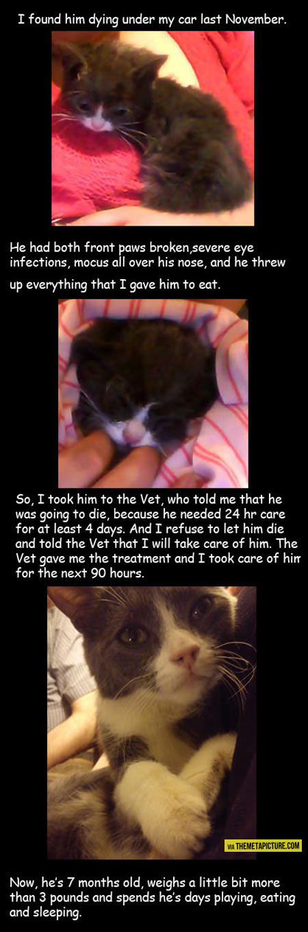 funny-baby-kitty-found