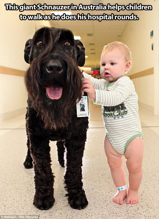 funny-baby-learn-walk-dog