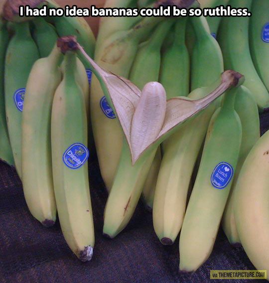 Ruthless bananas…