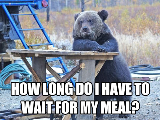 funny-bear-waiting-meal