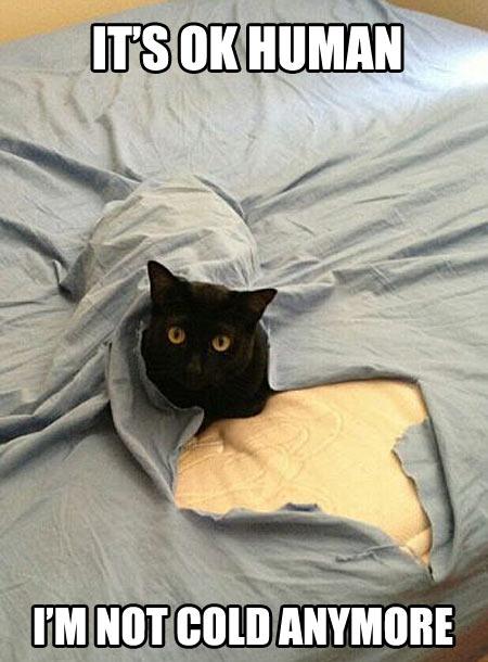 funny-black-cat-blanket-break
