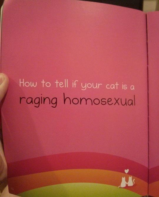 funny-book-cat-gay-love